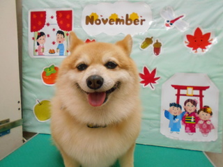 20.11.22川俣 福助.JPG