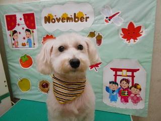 20.11.27松本 ミルキー.JPG