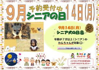 シニアポスター ブログ用 .png