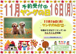 ヤングの日 ブログポスター.png