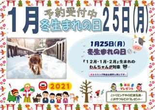 冬生まれの日 ブログ.png
