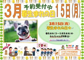 春生まれの日ポスター ブログ.png