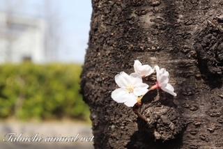 30年4月1伊藤ブログ.jpeg